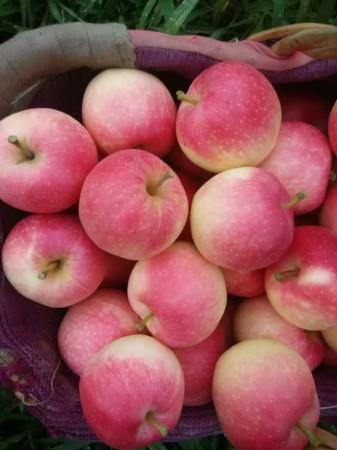 香甜可口大苹果