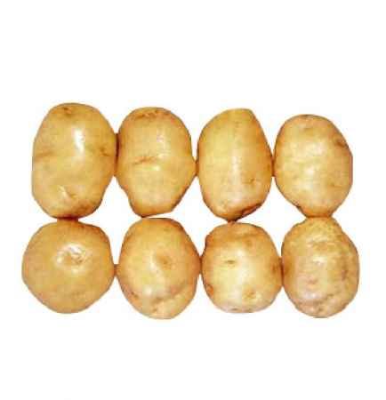早大白马铃薯