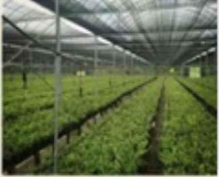 石斛种植基地